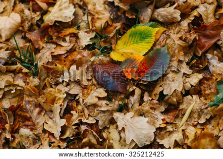Several large leaves on  the background with autumn recent colorful foliage - stock photo