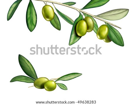 Several olives on a branch. Digital illustration, clipping path included. - stock photo