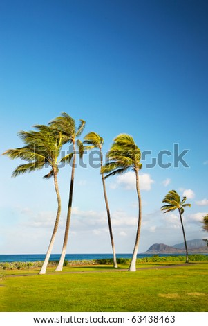 Several palm trees blowing in the wind near the ocean in Hawaii.  Room for copy. - stock photo
