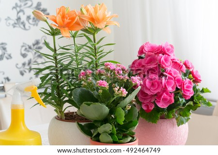 Several potted flowers are on the table in the room