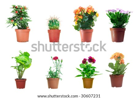 Several potted plants isolated over white background - stock photo