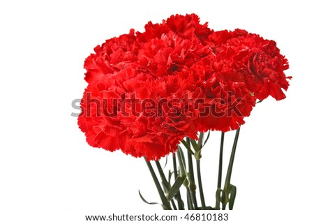 Several red carnation flowers on white background