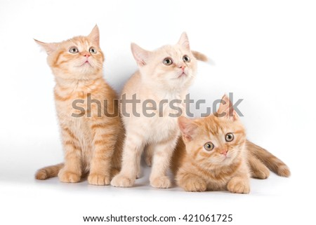 Several red striped kitten in a box - stock photo