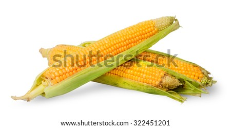 Several ripe cobs of corn partially peeled isolated on white background