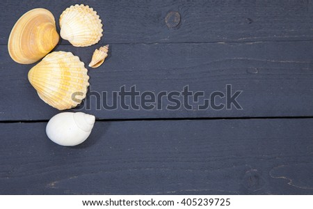 Several sea shells on dark black wooden background - stock photo