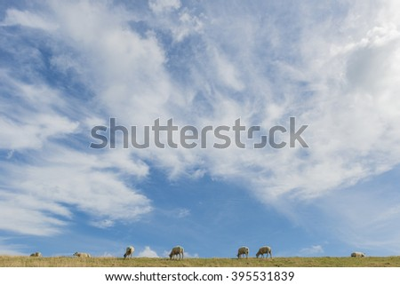 Several sheep on a dike on the isle of Texel. - stock photo