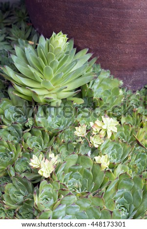 several succulent plants next to a large terracotta pot. Space for copy - stock photo