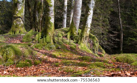 Several trees in Norwegian forrest at autumn - stock photo