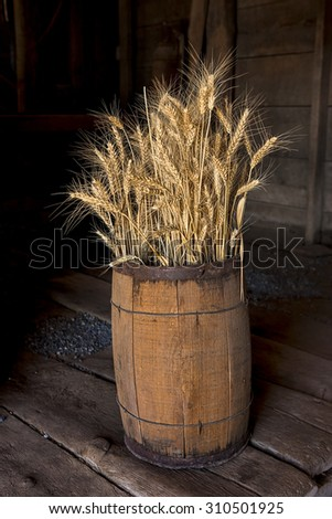 Several wheat stalks are stacked in a wooden barrel. - stock photo