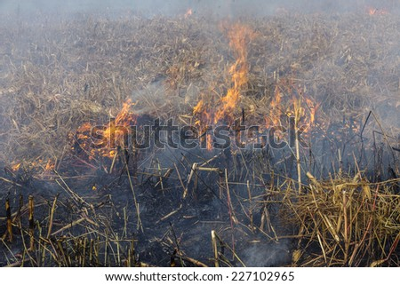 Severe drought. Fires agricultural fields to dry completely wind farms. Emergency Ukraine brings regular damage to nature and the regional economy.  - stock photo