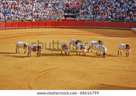 SEVILLE - APRIL 30:  The cows come into the ring to help remove a pardoned bull during a bullfight for a sold out crowd at the Plaza de Toros de Sevilla April 30, 2009 in Seville, Spain. - stock photo