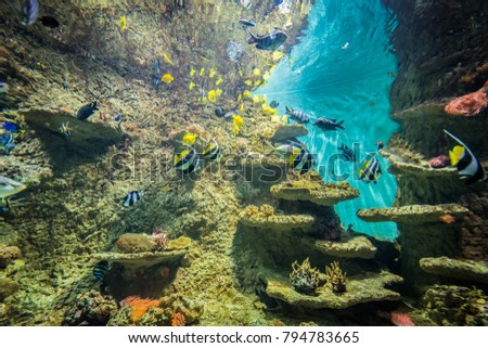 SEVILLE, ES - JULY 28, 2017: Aquarium in Seville, located in Delicias Dock in Andalusia, Spain.
