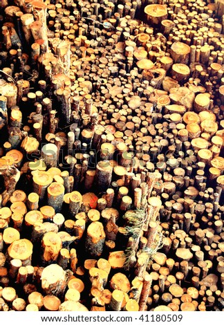 Sewed stumps of trees for combustion  in a biomass energy plant - stock photo