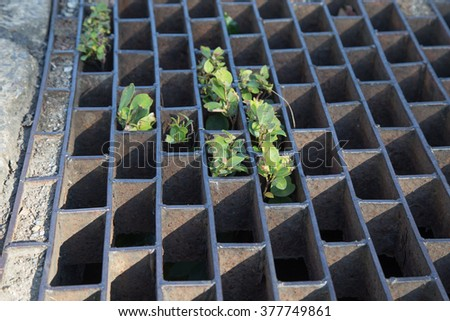 Sewer grate  - stock photo