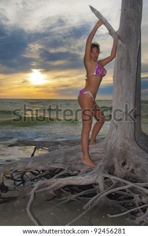 Sexy brunette girl posing next ot fallen tree against dramatic beautiful sunset - stock photo