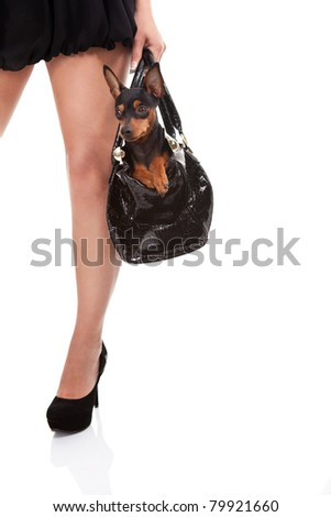 sexy leg and cute dog in woman's bag, isolated on white background - stock photo
