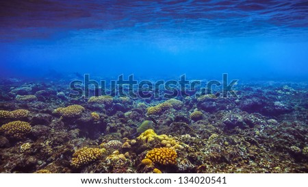 Seychelles island of Felicite, a coral reef under water - stock photo