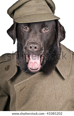 Sgt Boo Shouting his Orders! - stock photo