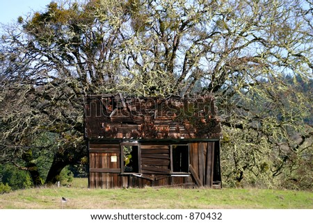 Shabby shack in the oaks - stock photo