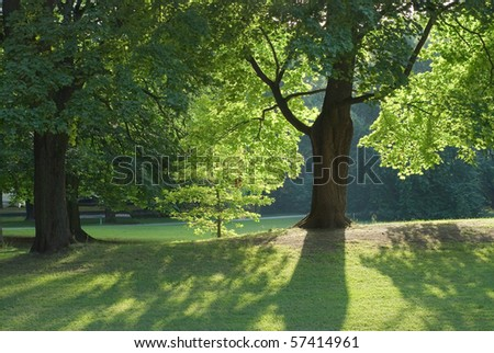 Shade and Low Light in the Woods - stock photo