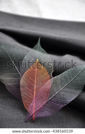 Shade of skeleton leaves on gray fabric background - stock photo