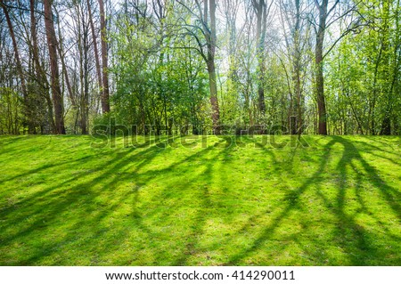Shades of trees on the grass in spring; Spring landscape with first green leaves at bushes and trees; Light and shadow - stock photo