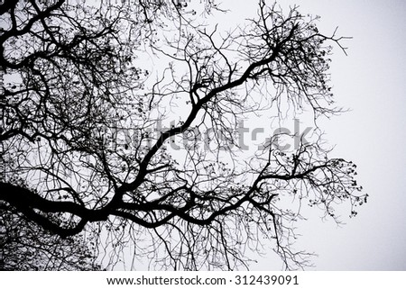 Shadow branch.