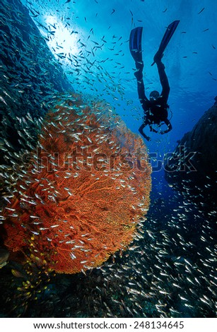 Shadow diver. - stock photo