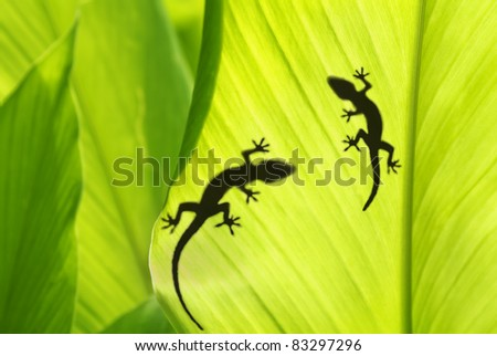 shadow of a gecko on a banana's leaf - stock photo