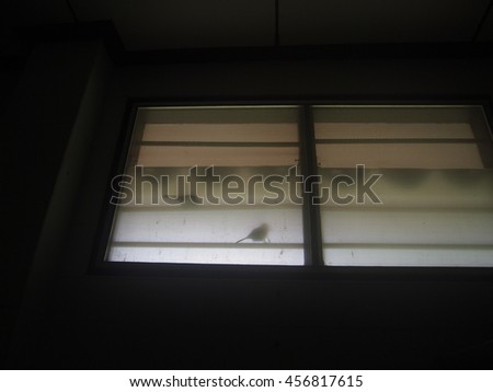 shadow of bird and black background - stock photo