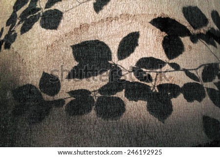 Shadow of branch of tree on trunk of the tree in evening light - stock photo