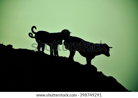 Shadow of dog on the hill