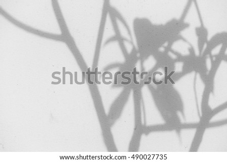 shadow of leaf tree on wall
