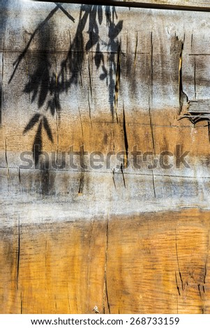 Shadow of leaves on an old wooden plank - stock photo