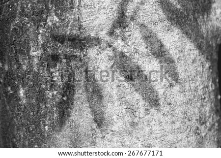 Shadow of leaves on trunk of the tree as background - black and white - stock photo