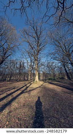 shadow of man in front of tall leafless trees  - stock photo