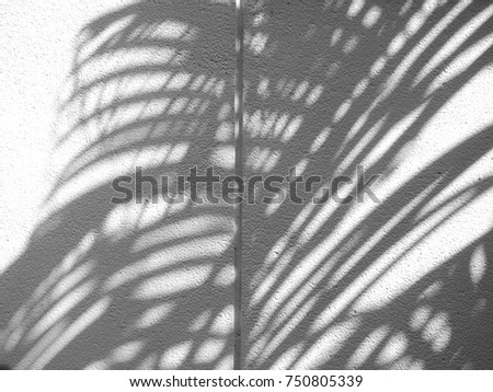 shadow of palm leaf on stone white wall texture