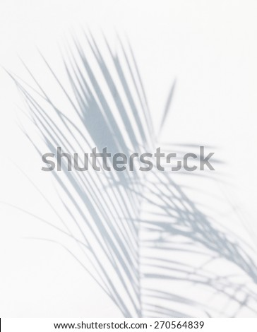 shadow of palm leaves - stock photo