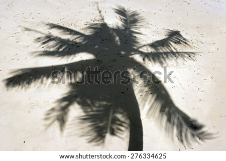 shadow of palm trees on the beach - stock photo
