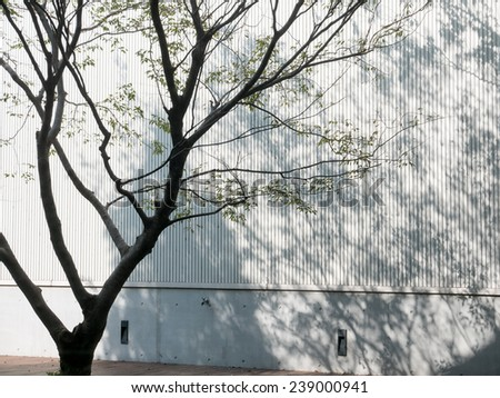 shadow of tree on the white wall - stock photo
