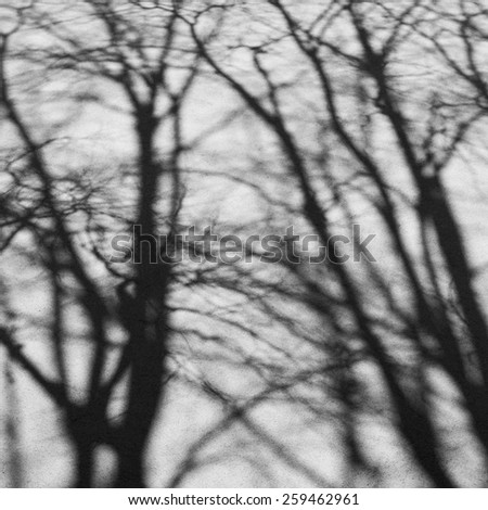 shadow of trees on wall  - stock photo