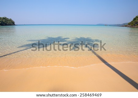 Shadow of two coconut palm trees on a transparent surface sea water and sandy shore - stock photo
