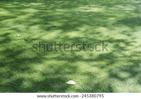 shadow on grass - stock photo