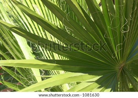 Shadow Palm - stock photo