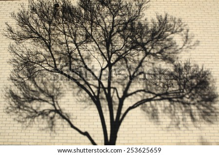 Shadow patterns of tree branches on a wall/ Blurred background of a wall with tree shadow on it.  - stock photo