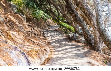 Shadow patterns on undulating coastal path Mount Maunganui, scenes from the track. - stock photo