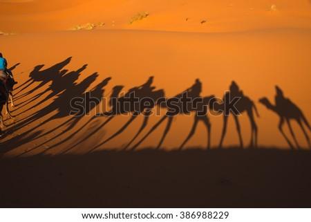 Shadows of camel riders - stock photo