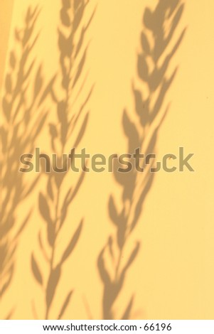Shadows of Hibiscus Leaves