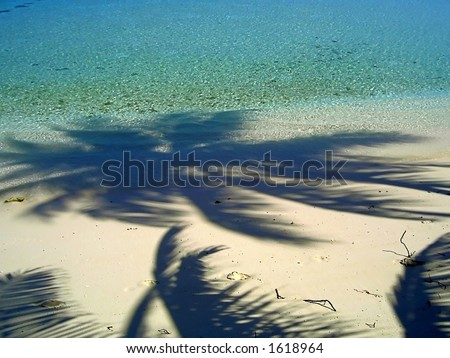 Shadows of the palm trees on the island in Indian Ocean - stock photo