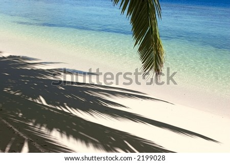 Shadows of the palmtree on the island Gan in Indian Ocean, Maldives - stock photo